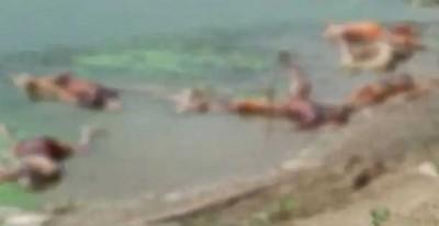 হৃদয়বিদারক দৃশ্য; নদীতে ভাসছে সারি সারি লাশ, ছিঁড়ে খাচ্ছে কুকুর